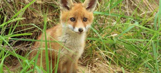 SOBOTA: Dzień bez futra w Rzeszowie. Żywy apel w obronie zwierząt