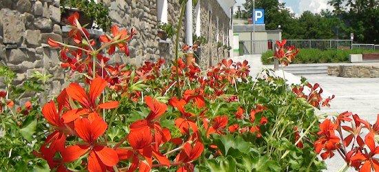 Pachnące kwiaty od kwietnia upiększą centrum Rzeszowa