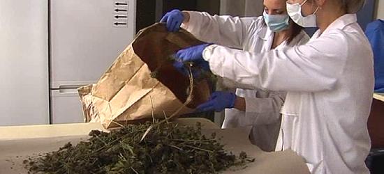 Policjanci zatrzymali 56 kg marihuany (FILM, ZDJĘCIA)