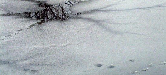 Kruchy lód na Wisłoku. Służby interweniowały już kilkakrotnie