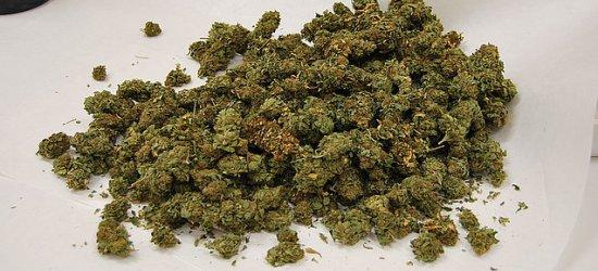 Wpadł podczas kontroli, miał ponad 6 kg marihuany (FILM, ZDJĘCIA)