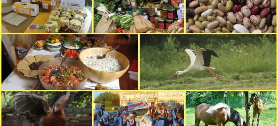 RETRANSMISJA / WARSZAWA: Konferencja Prawdziwe Rolnictwo. Prawdziwa Żywność od Prawdziwych Rolników na tvEkologia.pl !