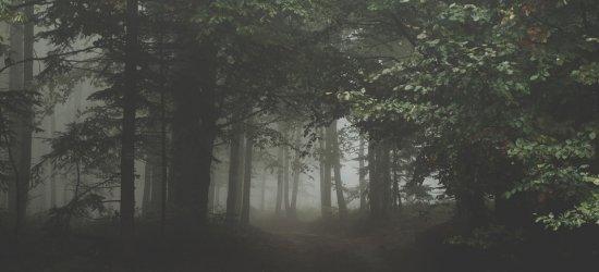 Zaginiony 24-latek przebywał w lesie. Zmarznięty i osłabiony trafił do szpitala