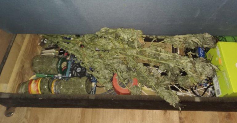 Marihuana ukryta w szafach i łóżku. Dwóch braci odpowie za uprawę konopi indyjskich